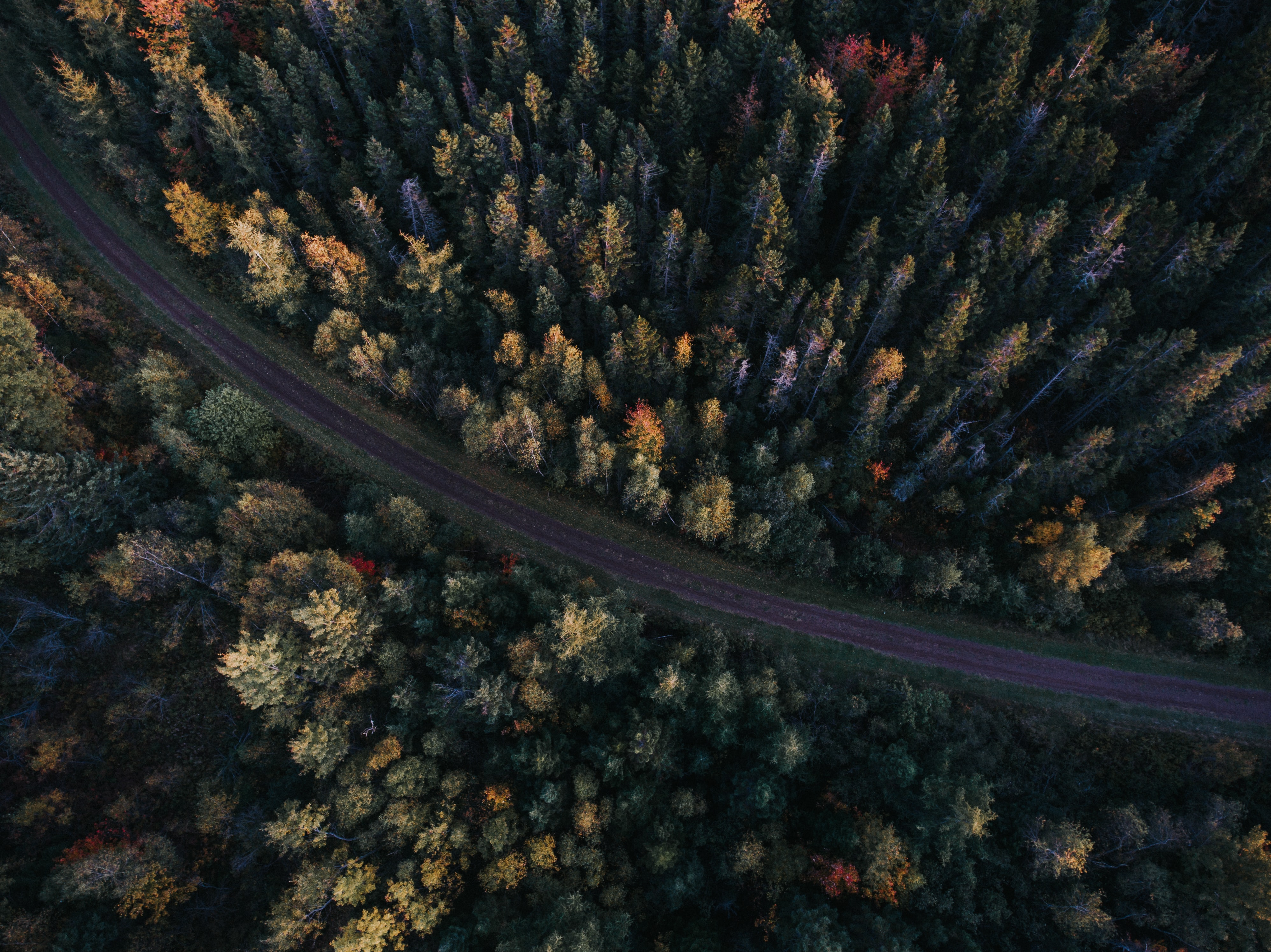 A drone shot of a colorful forest at the sides of a narrow road