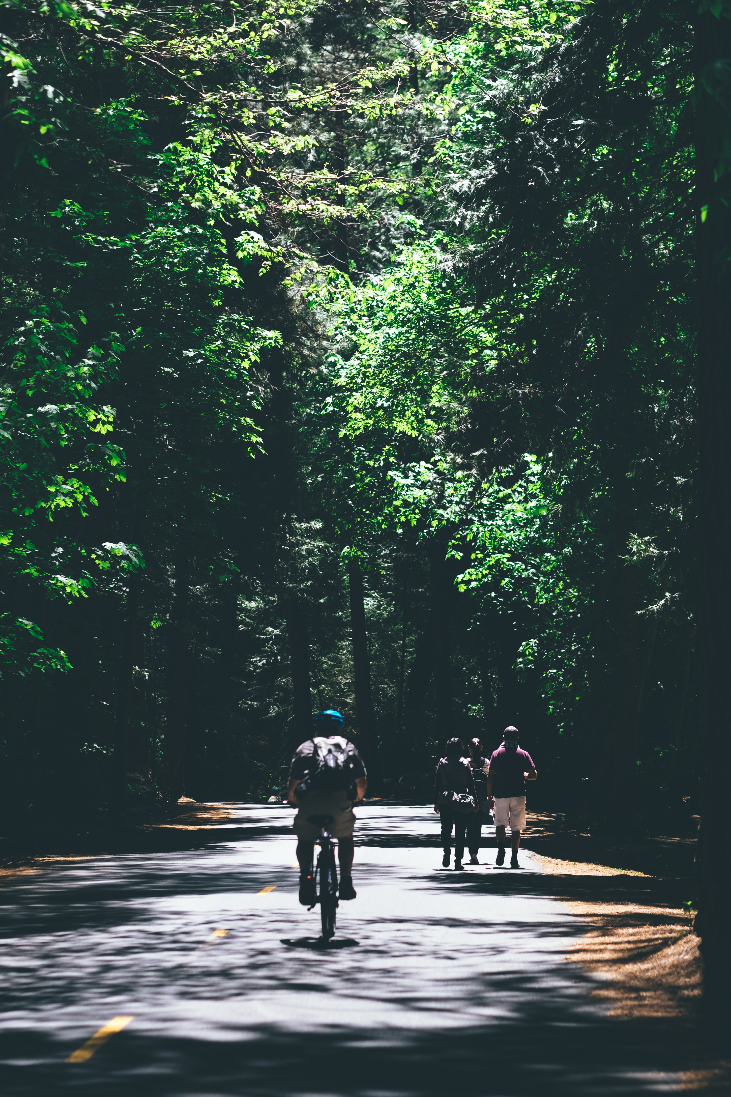 A cyclist and a group of three people walking down a street cutting through a dark forest lit by sunlight