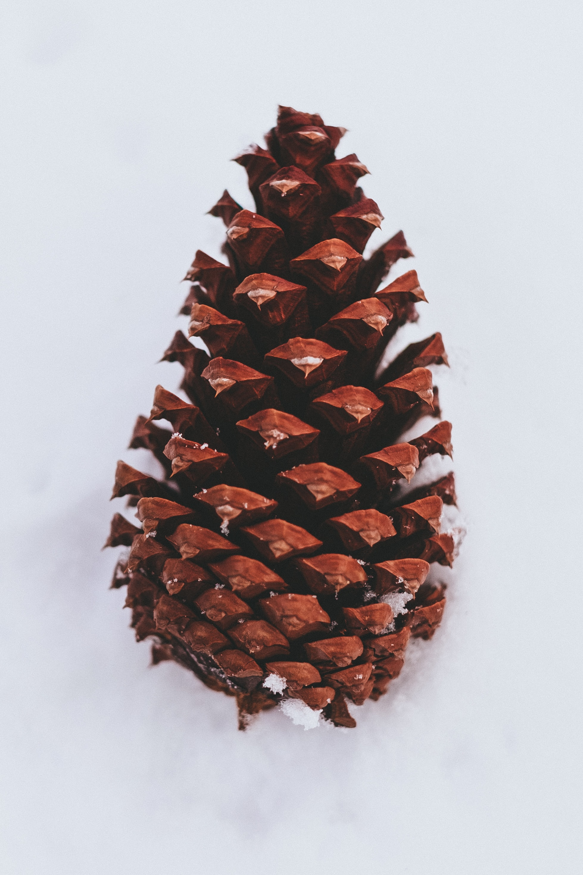 closeup photography of brown pine cone on snow