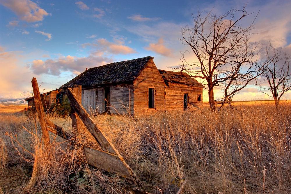 landscape photography of shack near leafless tree
