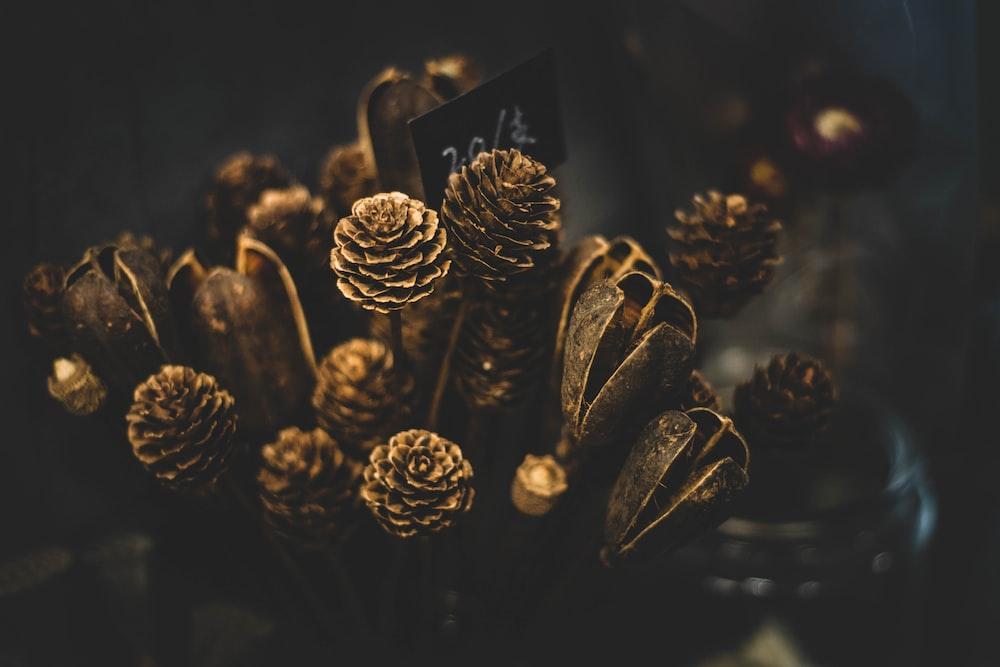 macro photo of pinecone plant