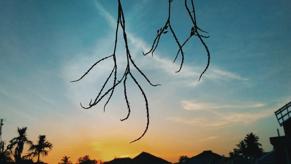 silhouette photo of tree branch under cloudy sky during golden hour