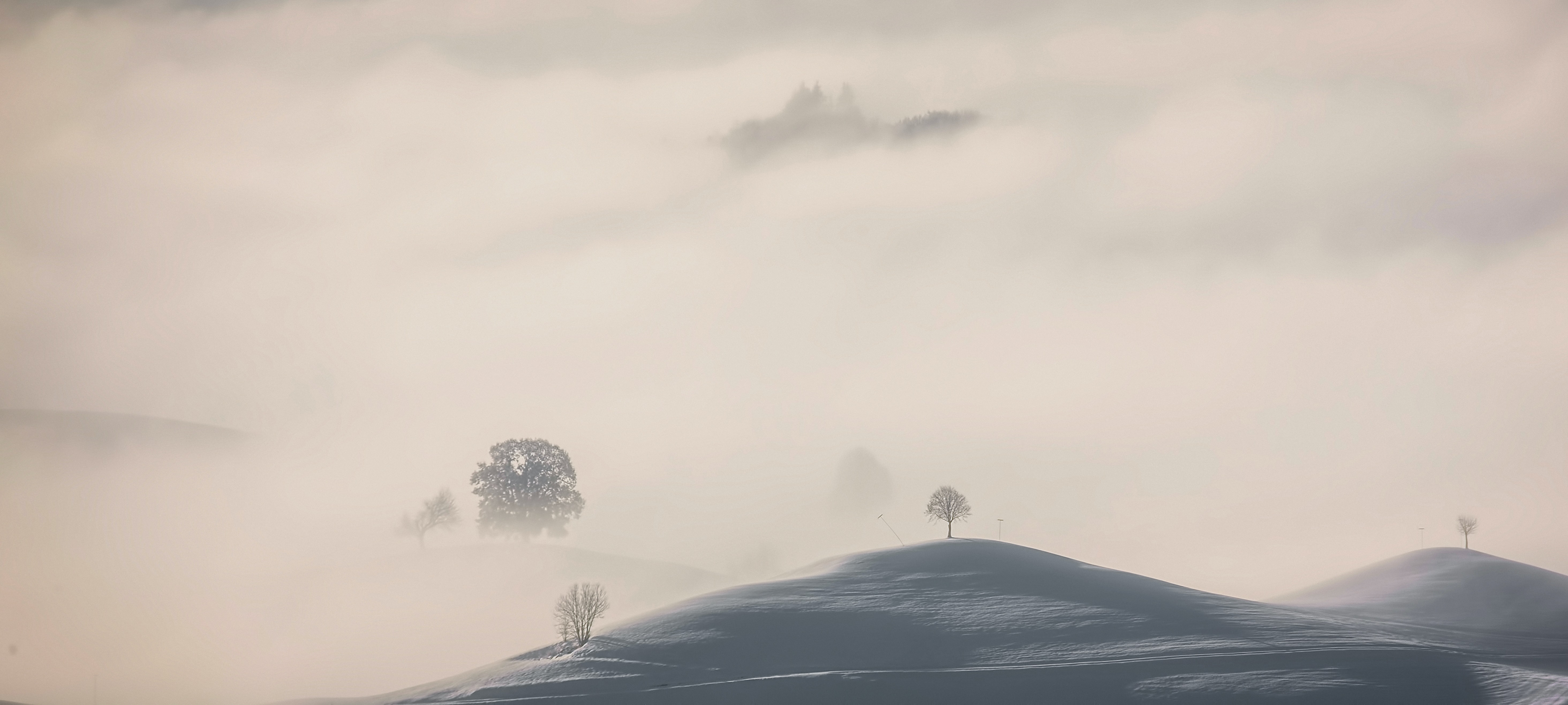 Fog over rolling hills and isolated trees in Hirzel