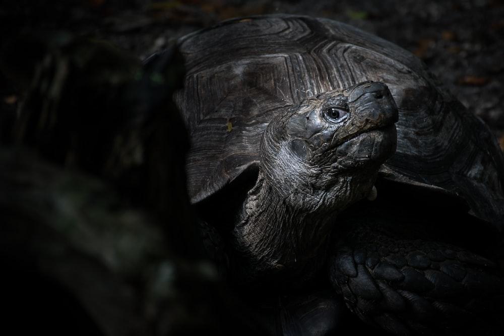 photography of tortoise