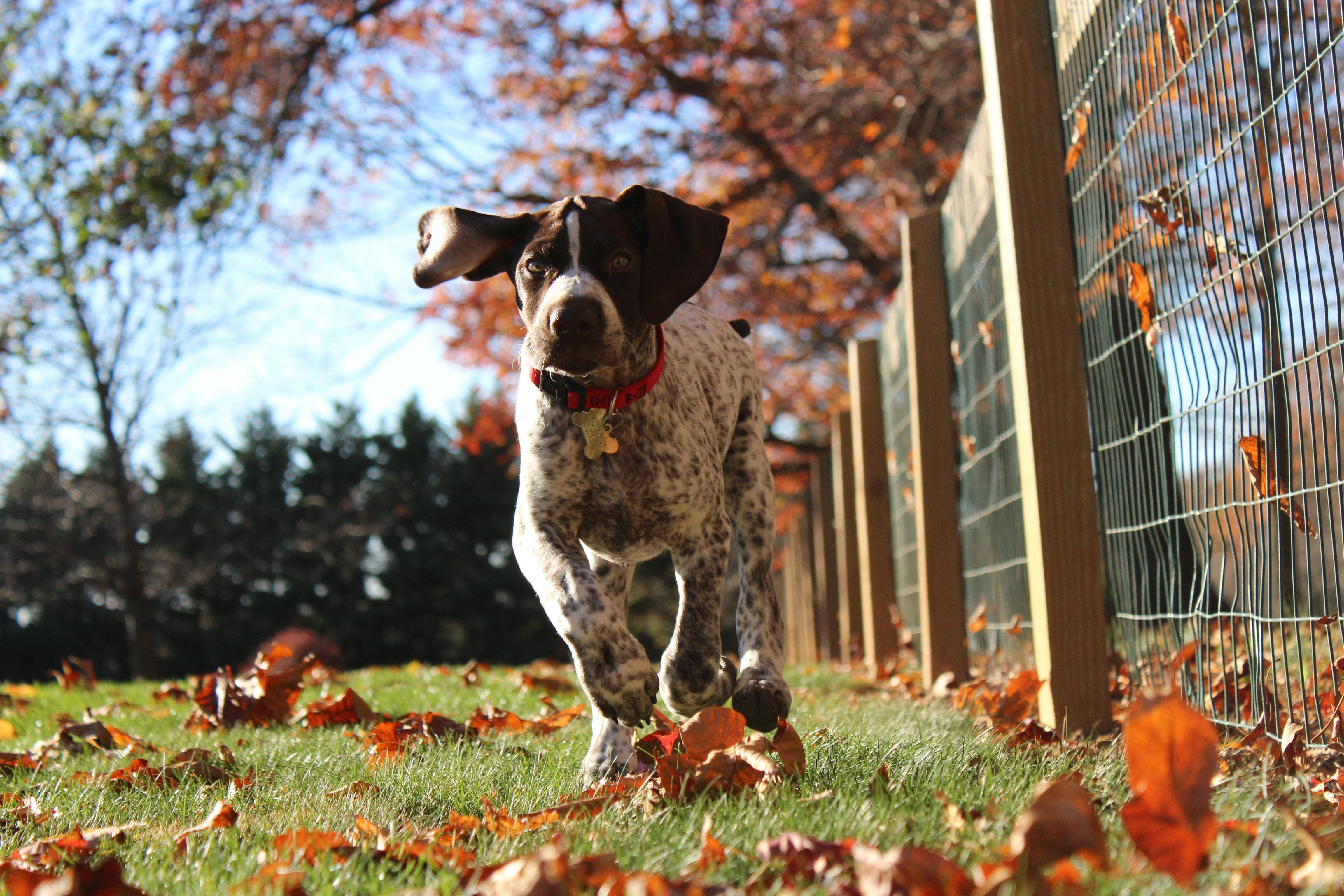 dog running beside a fence