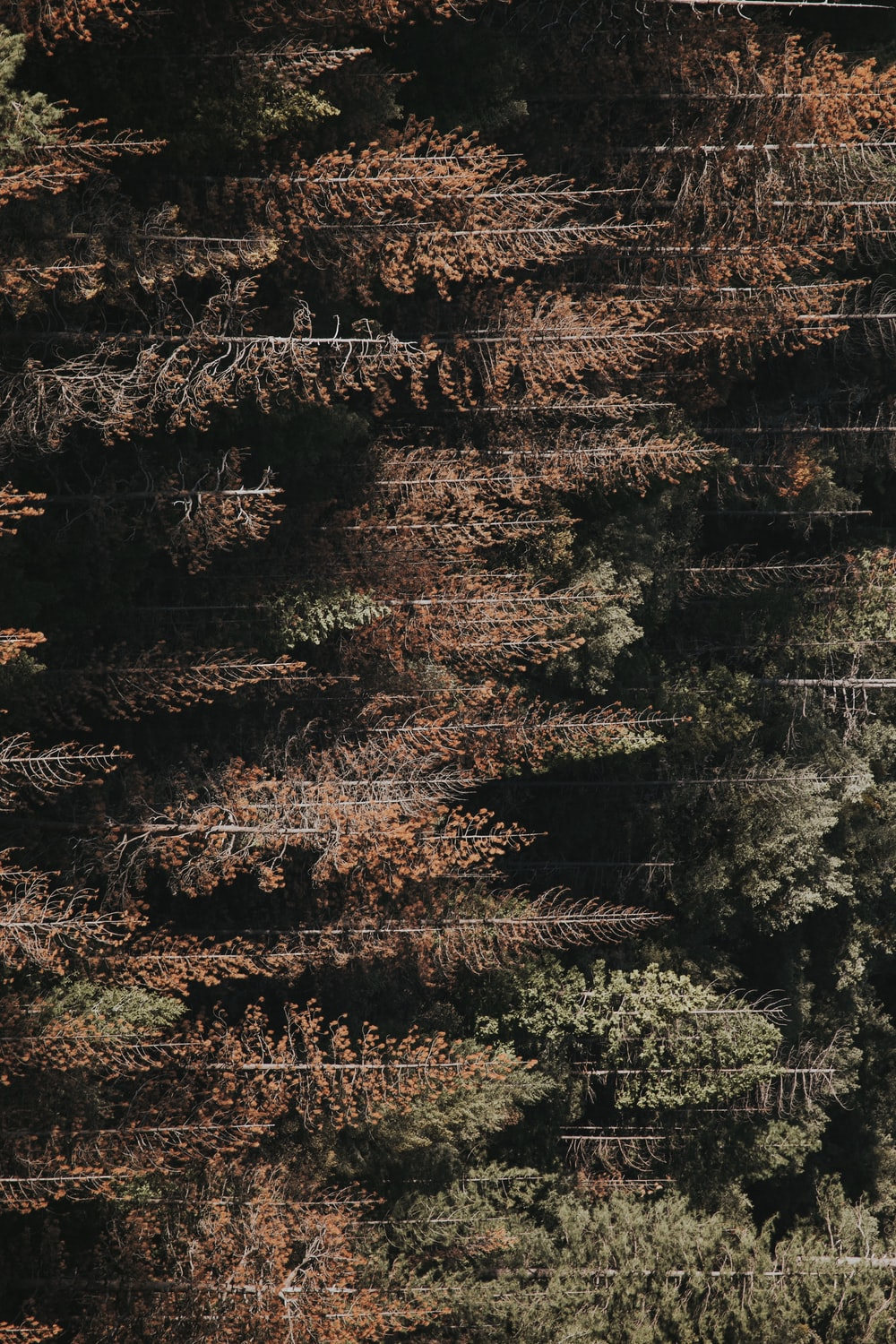 aerial view photography of forest field