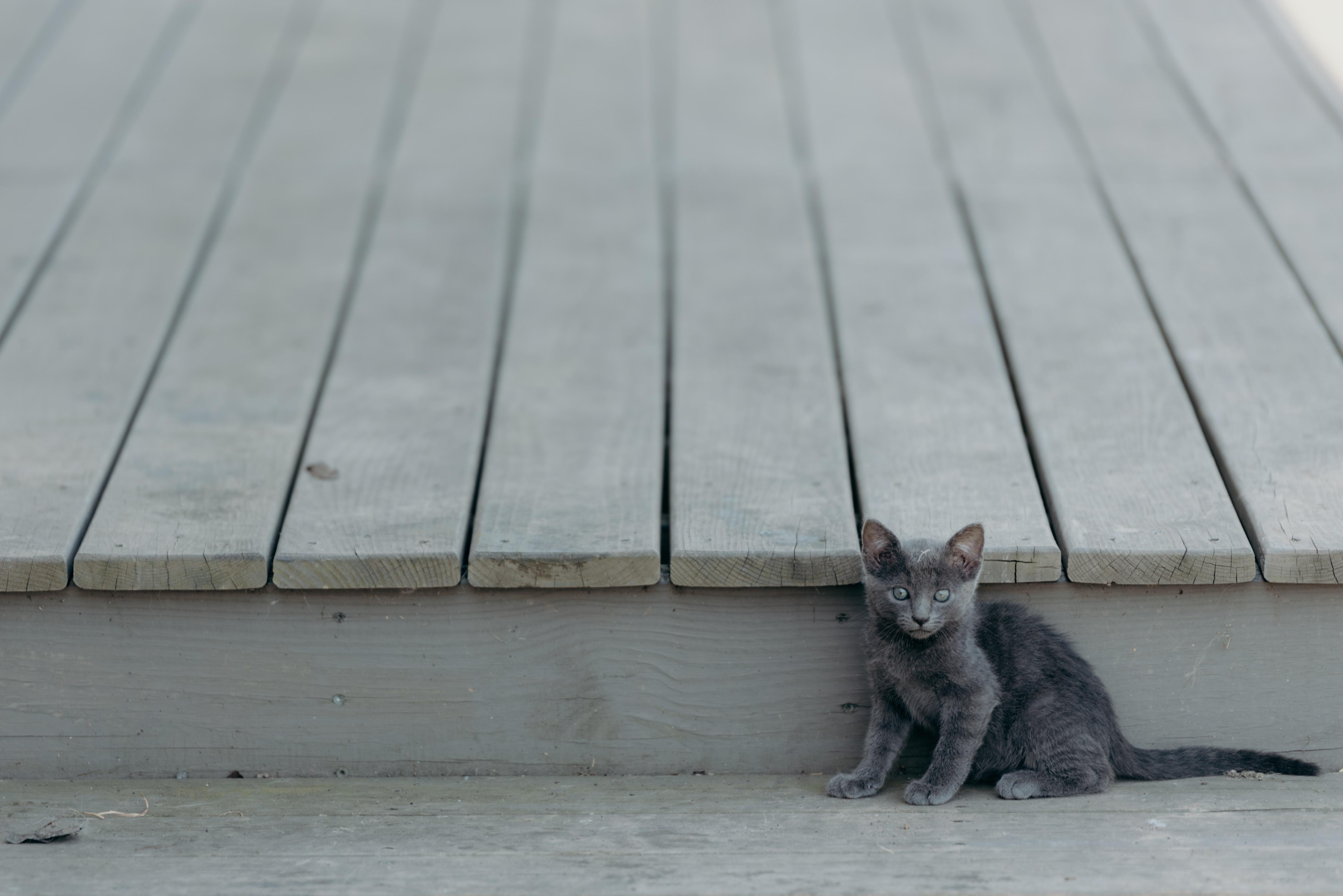 Gray kitten looking startled beside a wooden deck