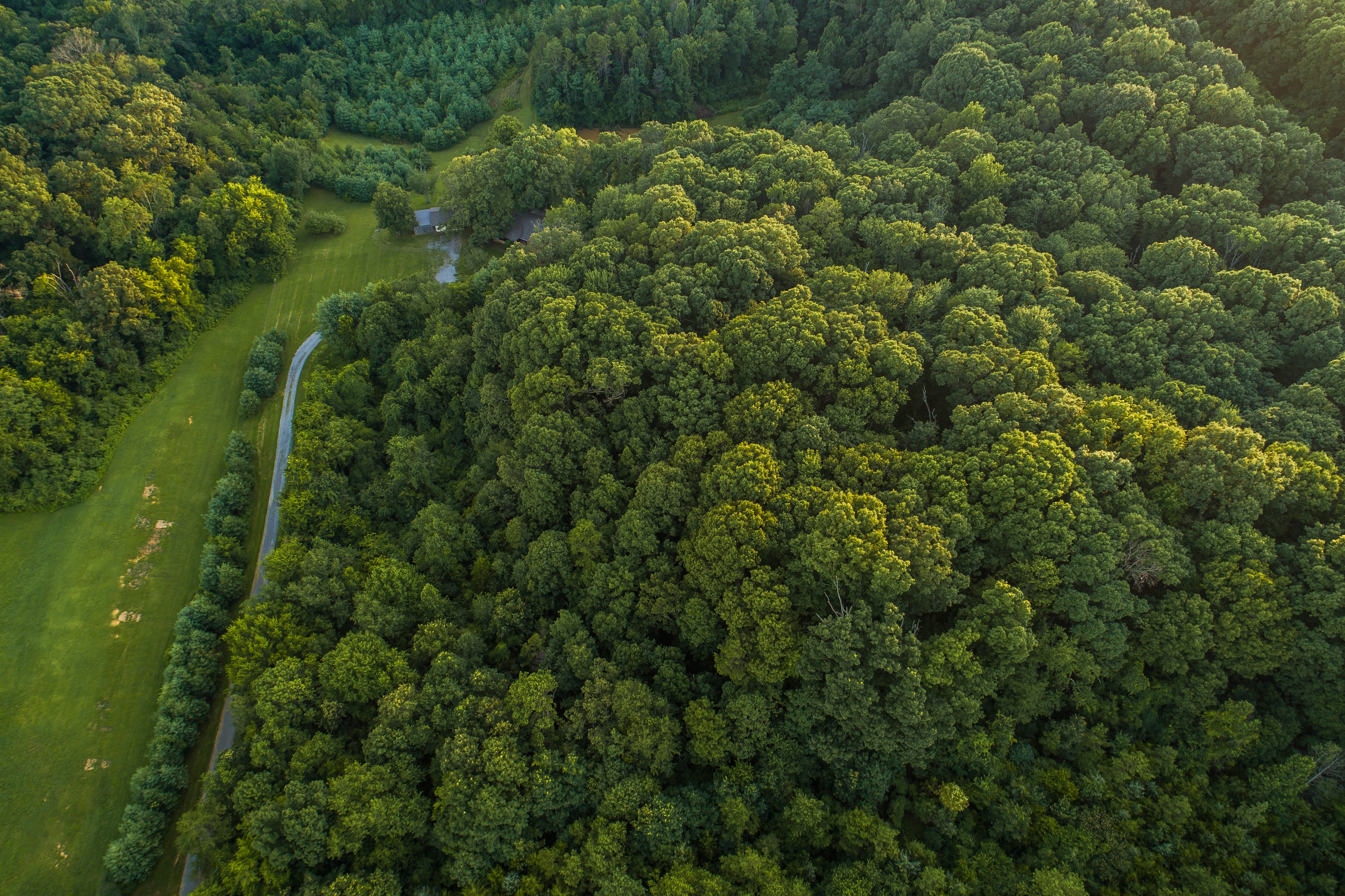 A drone shot of a road running along a green forest in Knoxville, Tennessee