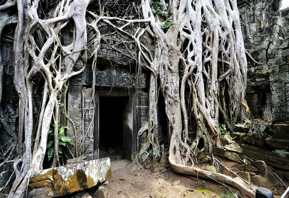 gray building with tree roots