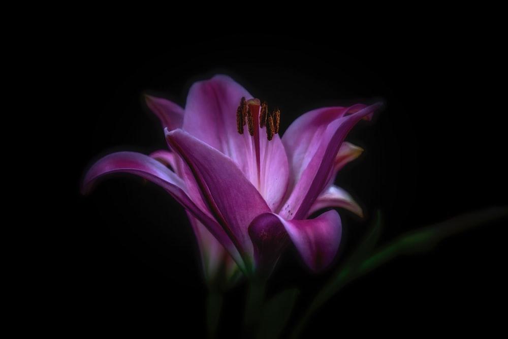 purple flower photography