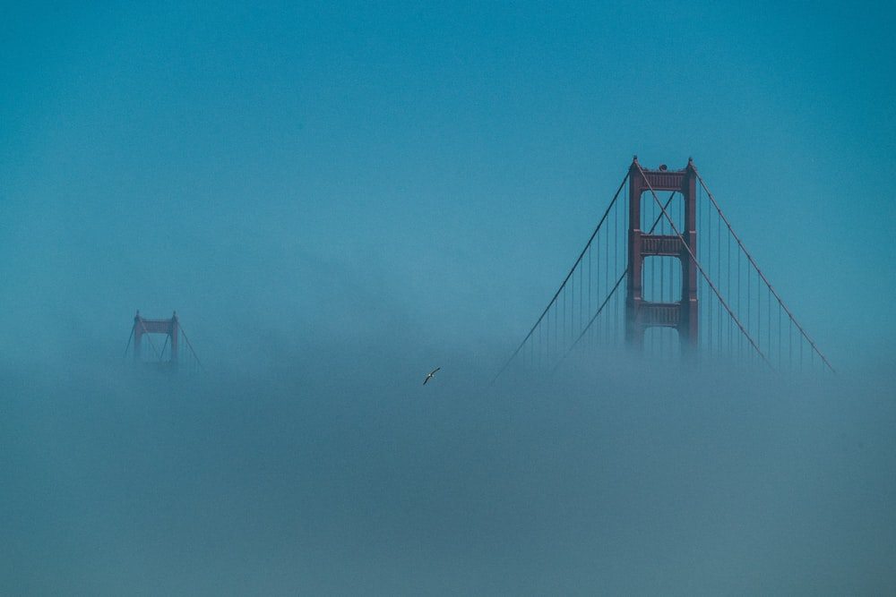 bridge covered with fog