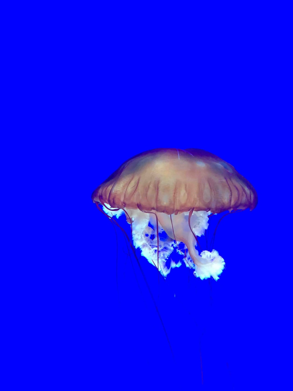blue and white jellyfish in blue water