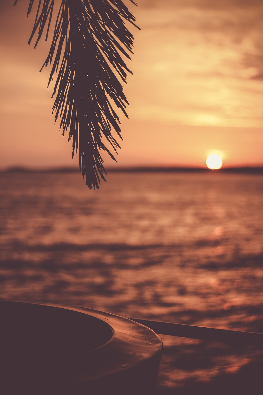 silhouette of tree with body of water background