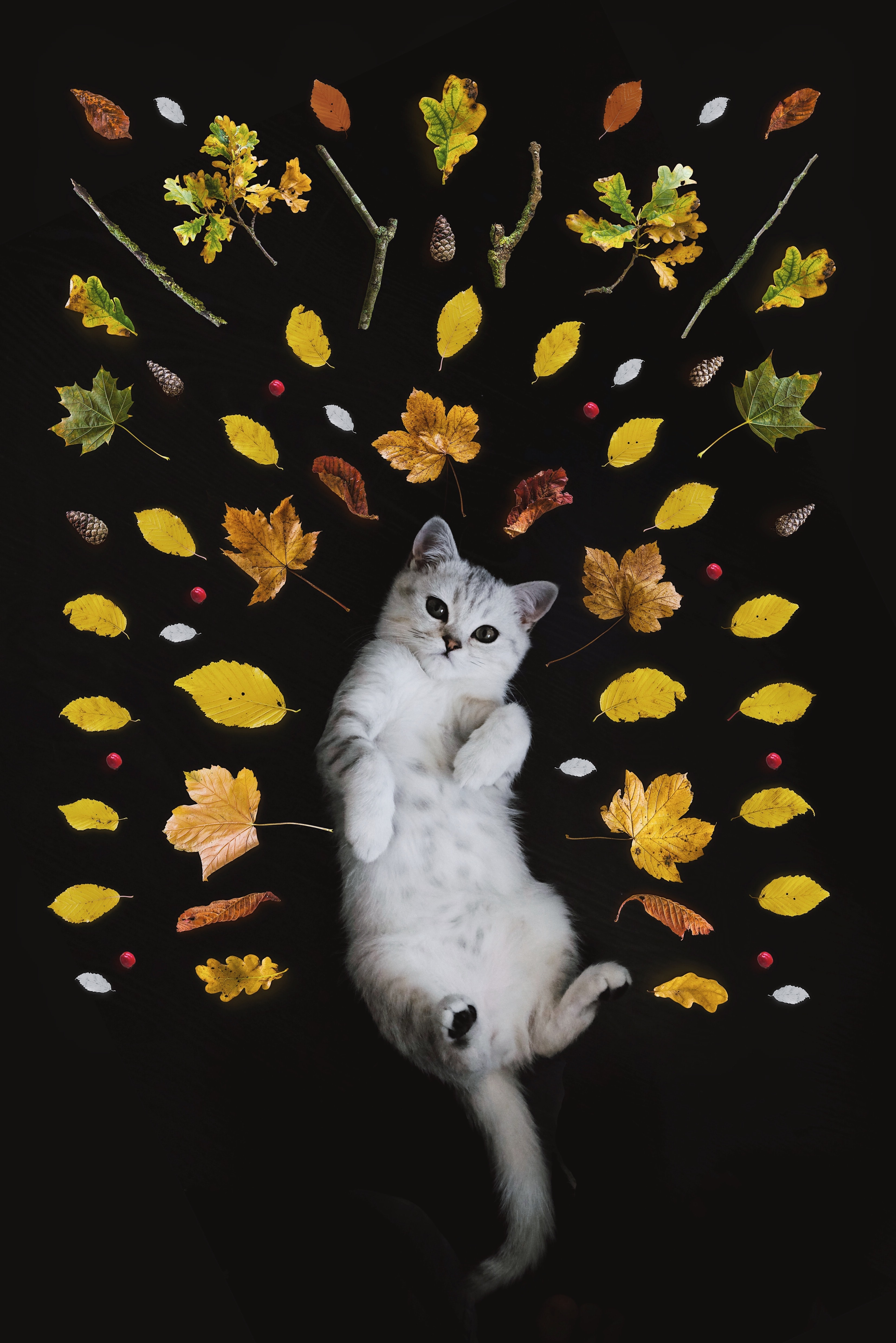 White domestic cat lying on back surrounded by multicolored leaves, twigs and berries as artwork