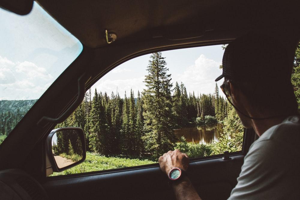 man sitting on passenger seat looking at pine tree
