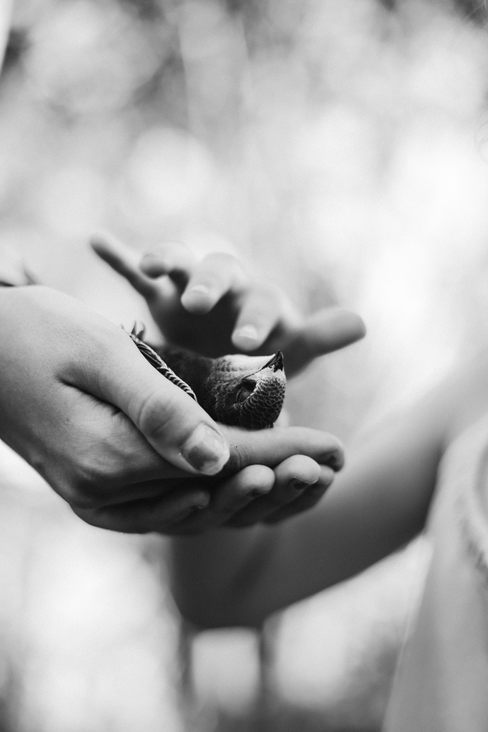grayscale photo of bird on person's hand