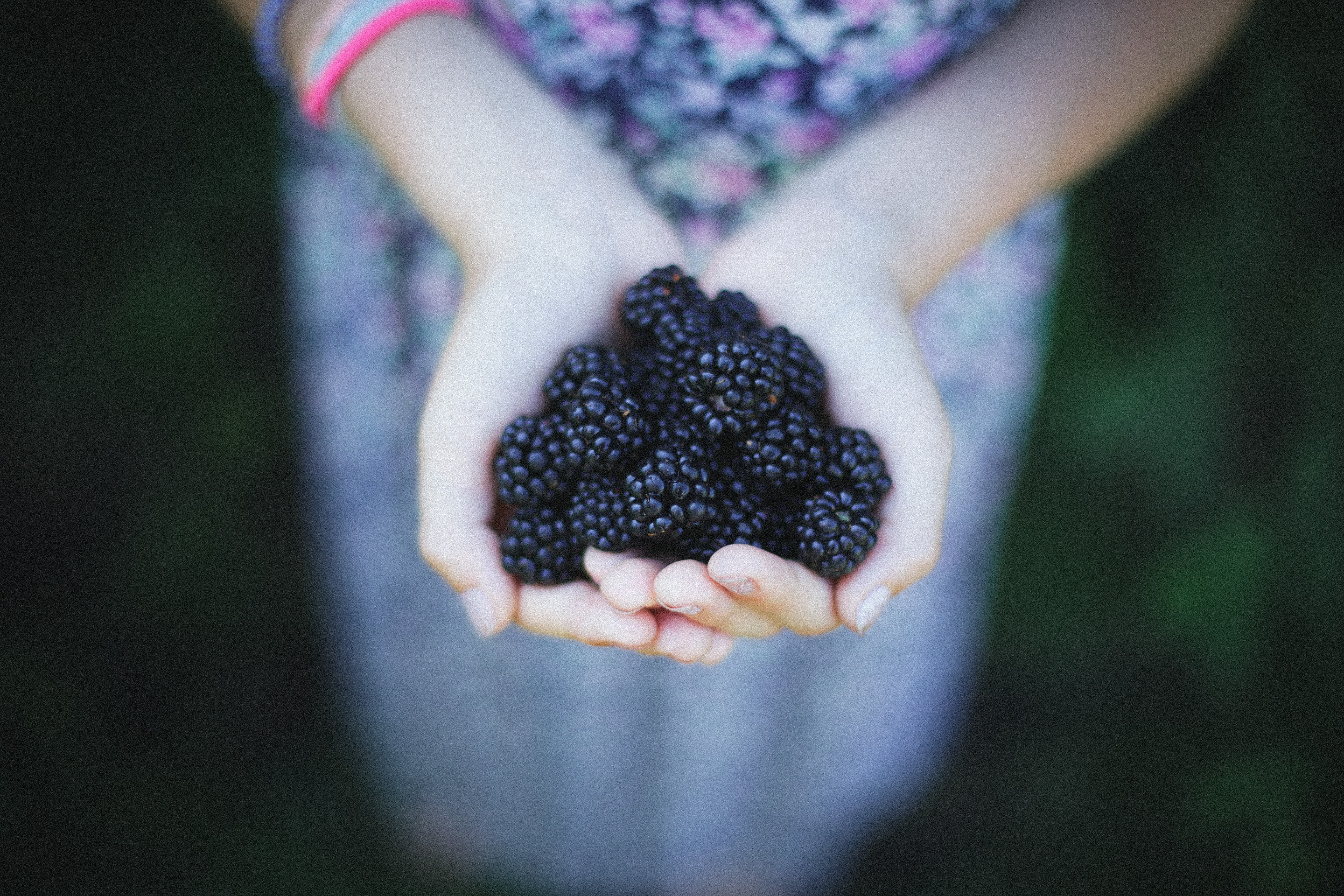 A person holding blackberries in their cupped hands