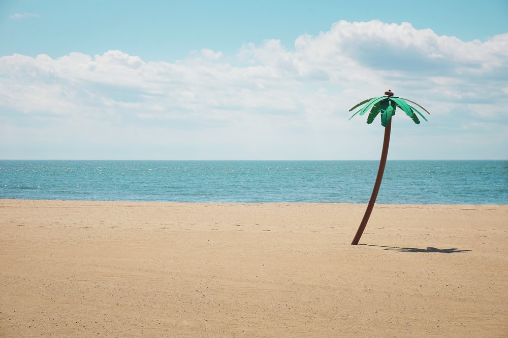 green artificial palm tree on seashore