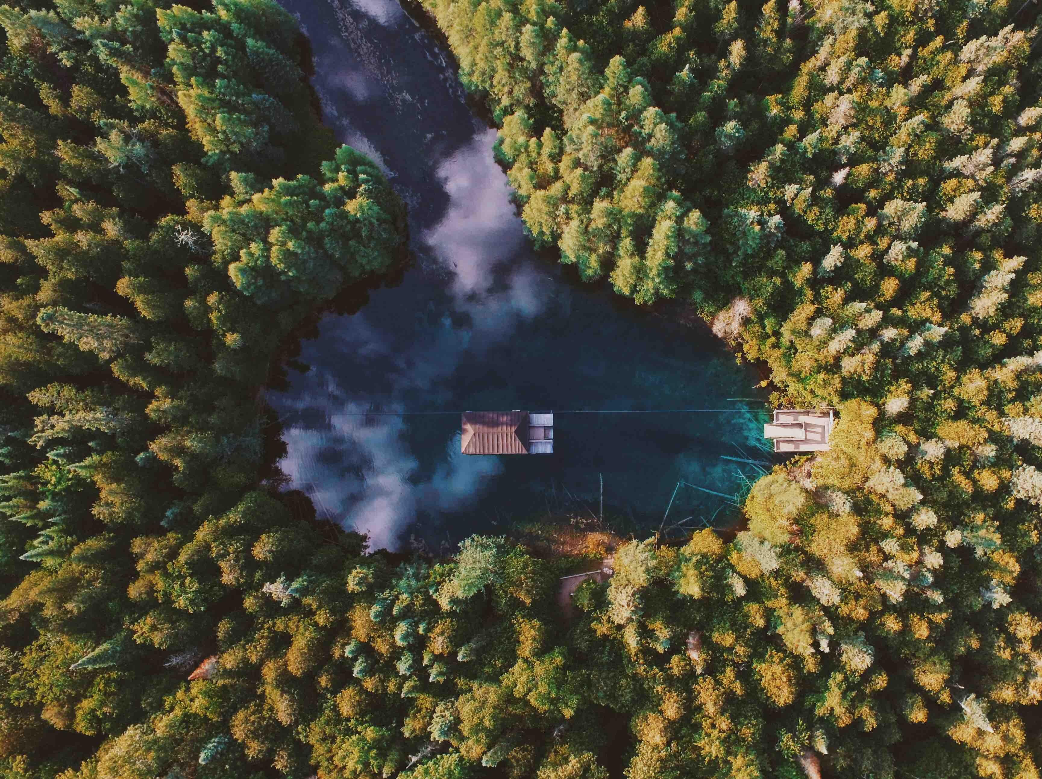 birds-eye view woods