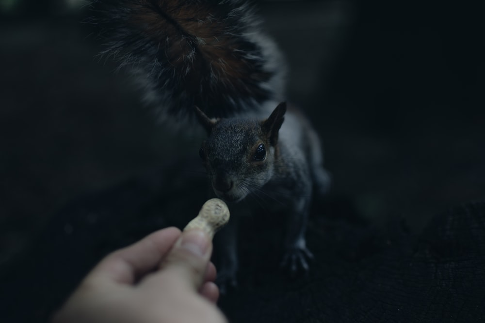 depth of field photography of person feeding squirrel