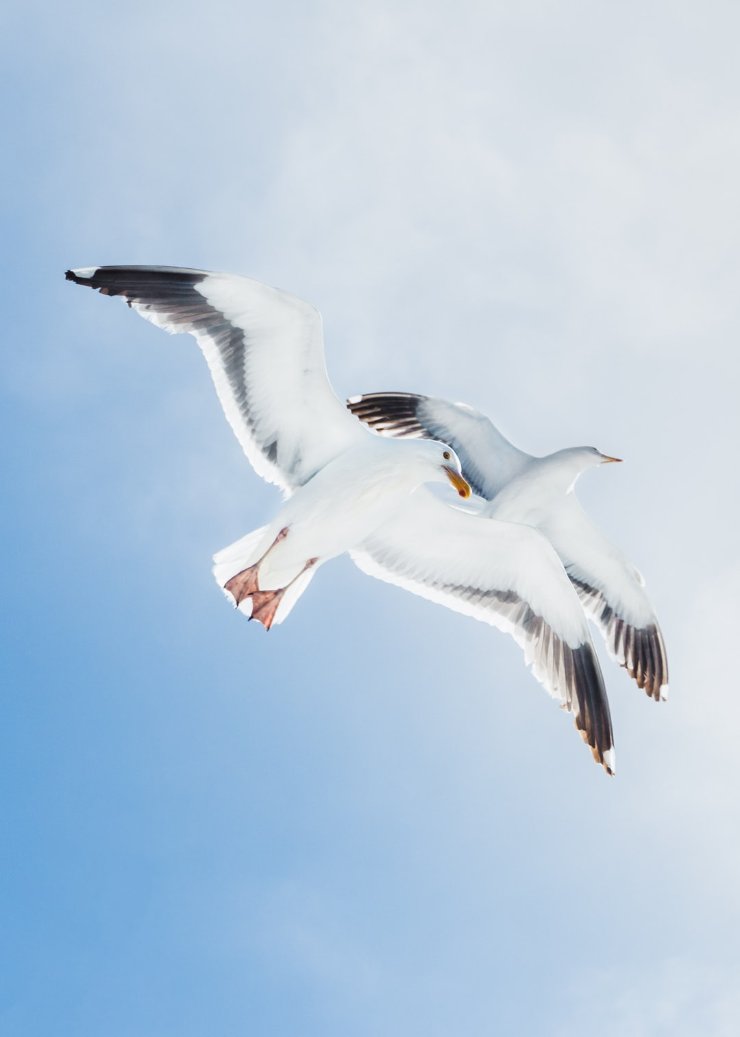 I was on a fishing boat off the coast of Southern California when I noticed seagulls taking turns gliding into the boat's slipstream just above the cabin. As I pulled up to shoot, a pair of them floated above me, catching an effortless ride at 20 knots.