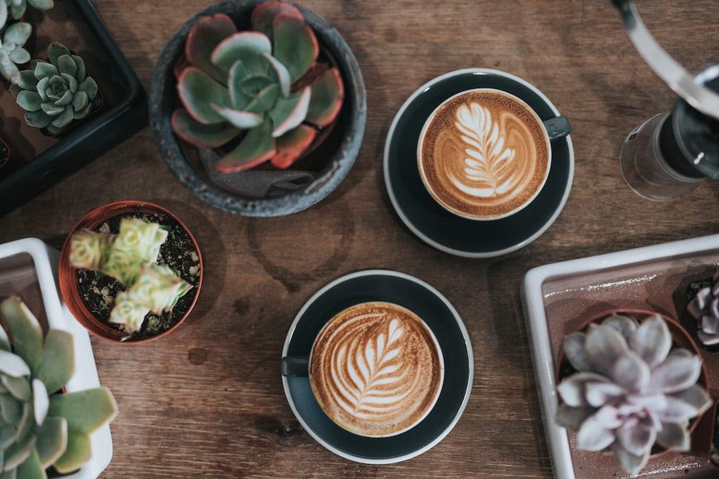 kawa dla początkujących jaką kawę wybrać
