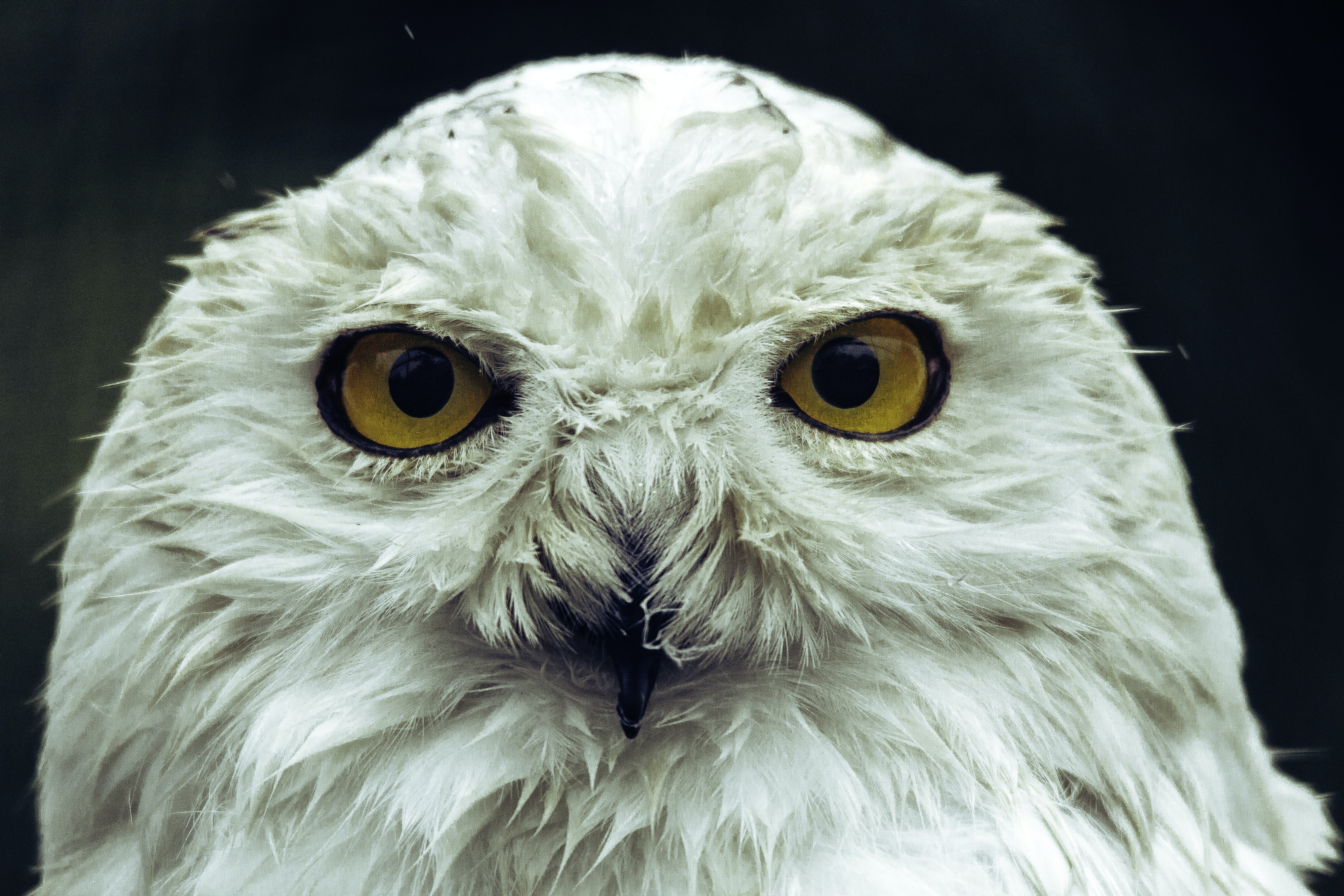 A white owl with orange eyes at Guldborgsund Zoo & Botanisk Have