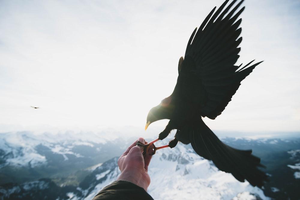 black bird on person left hand