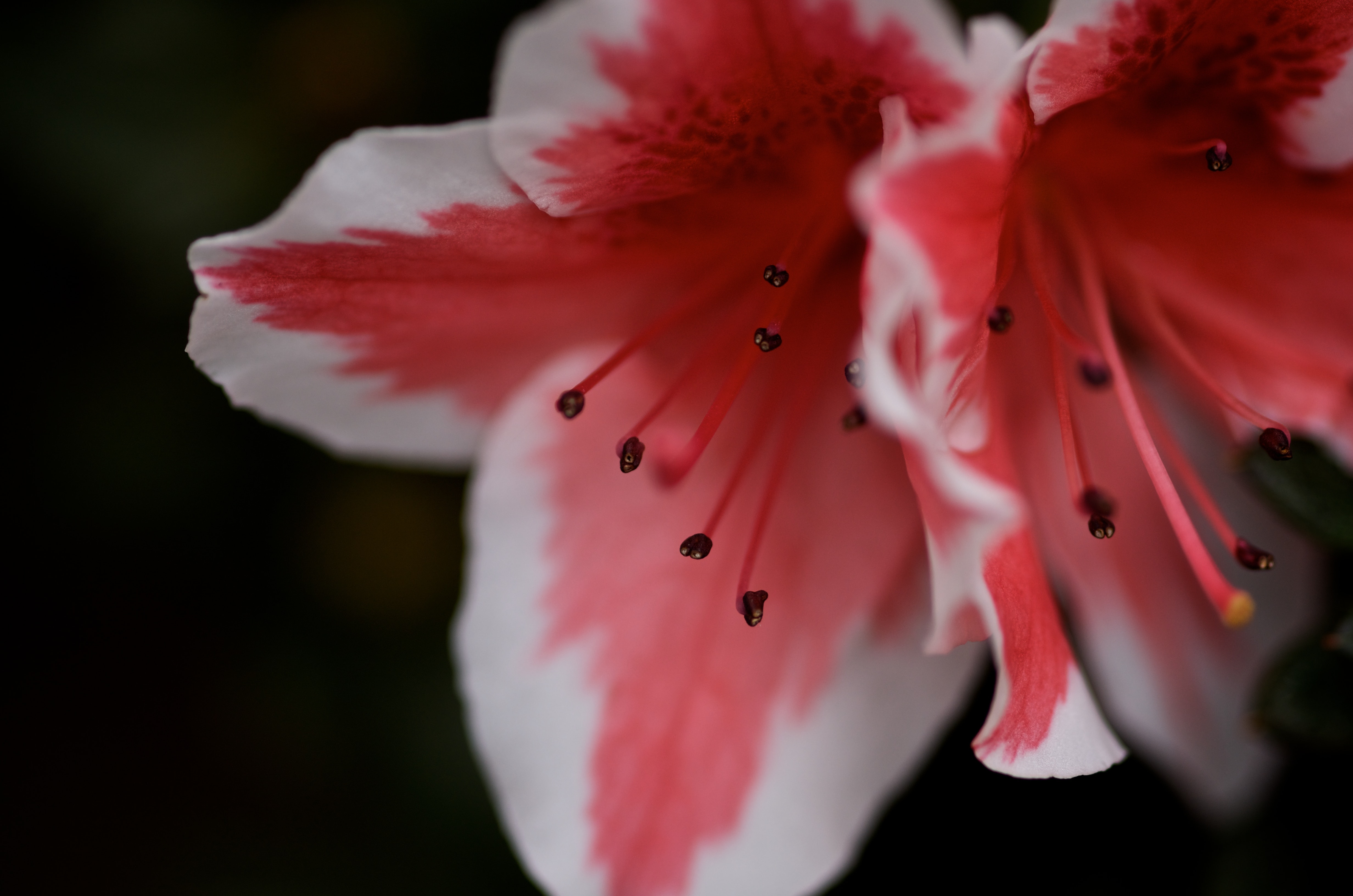 macro photography of petaled flower