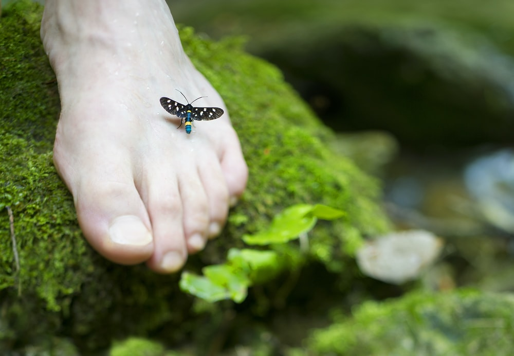 person's right foot with black and blue insect