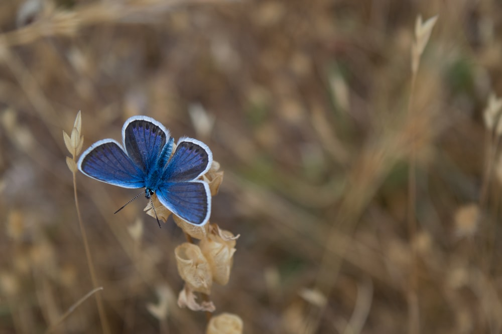 selective focus of butterfly on flower
