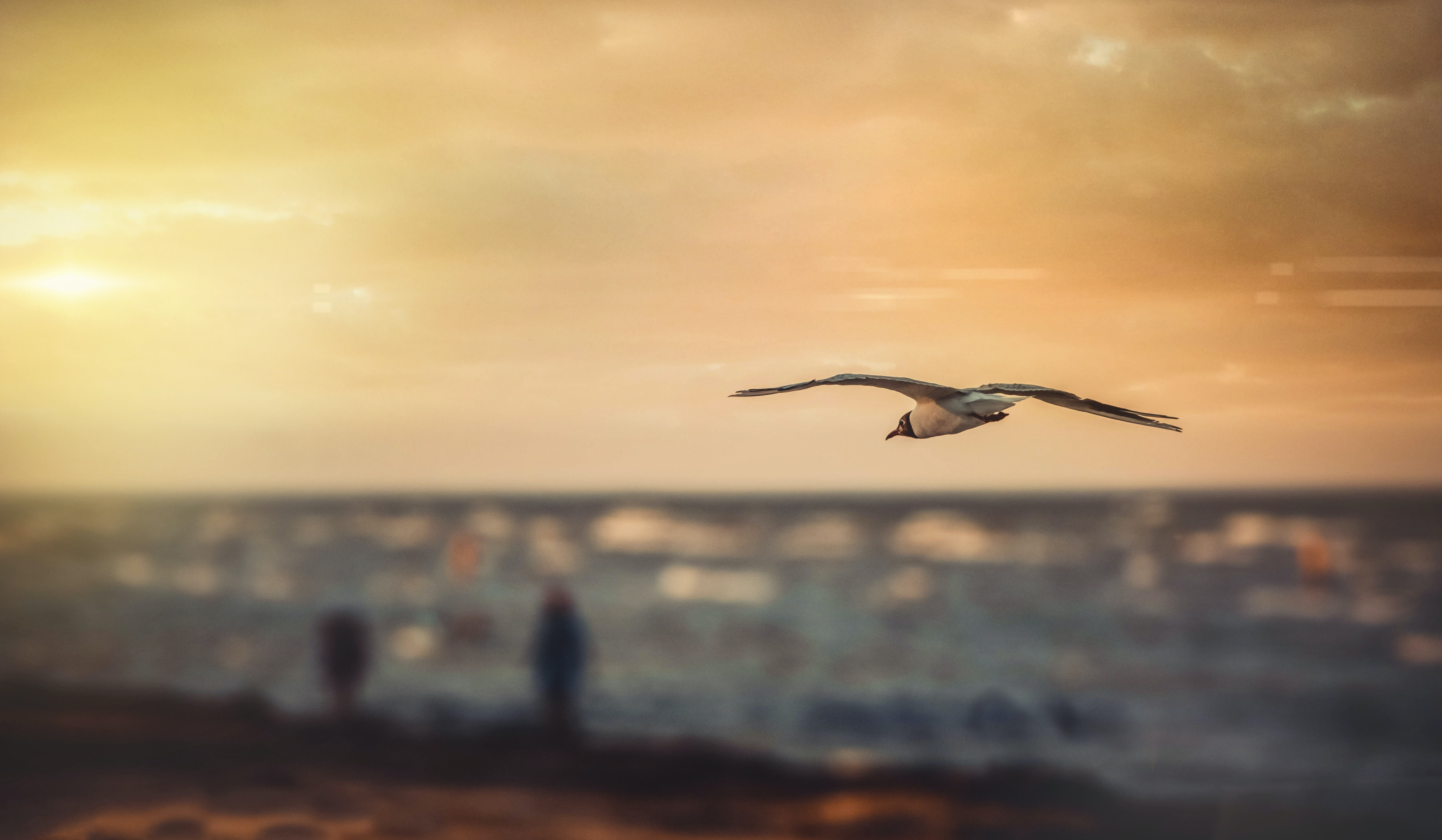 Seagull flying into the sunset above the beach in Ukraine