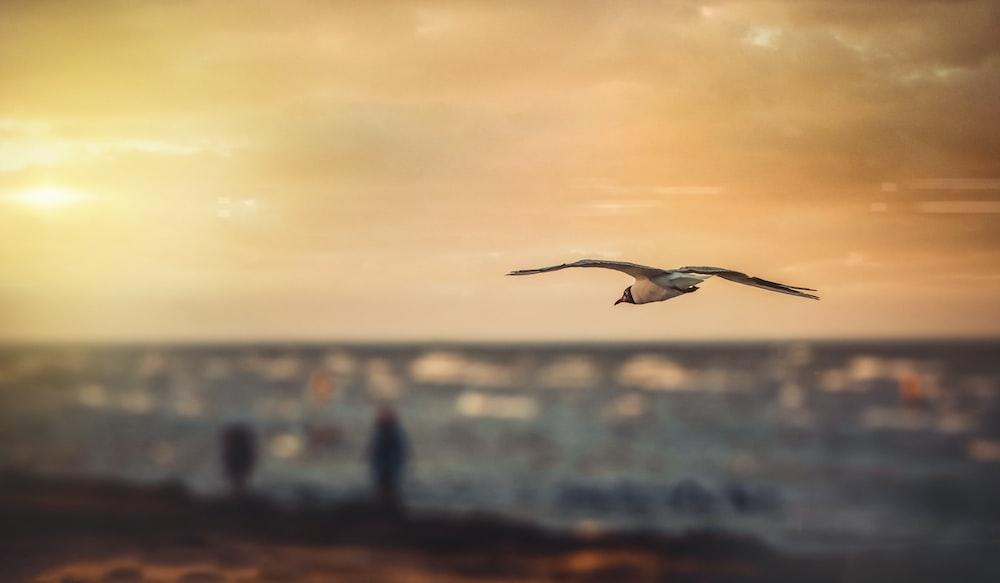 birds soaring under cloudy sky during golden hour