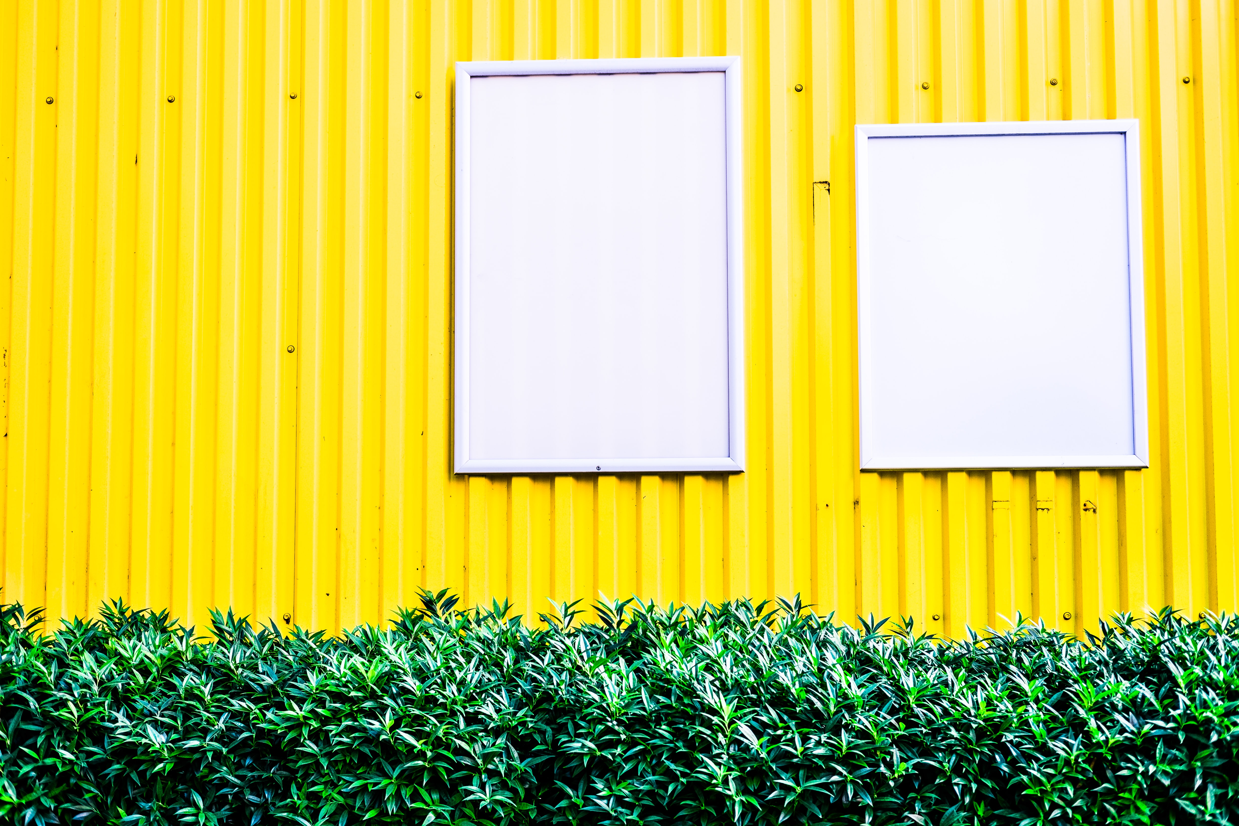 Two white notice boards resembling windows on yellow metal wall with bush in front