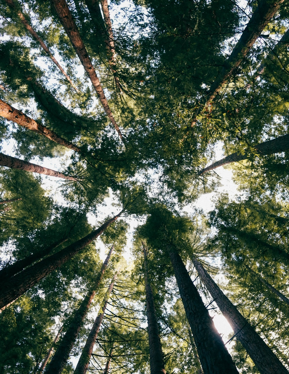 worms-eye-view photography of green-leaved trees
