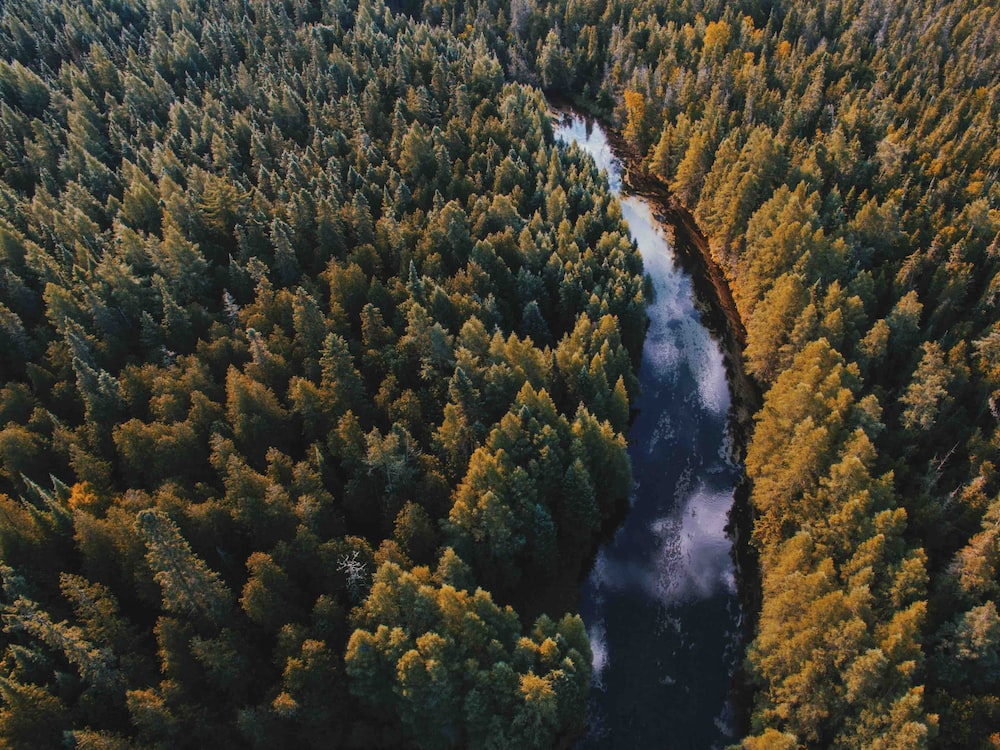 aerial view of river between forest
