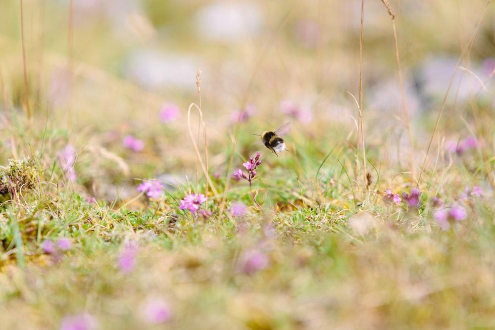 macro shot photography of black bee
