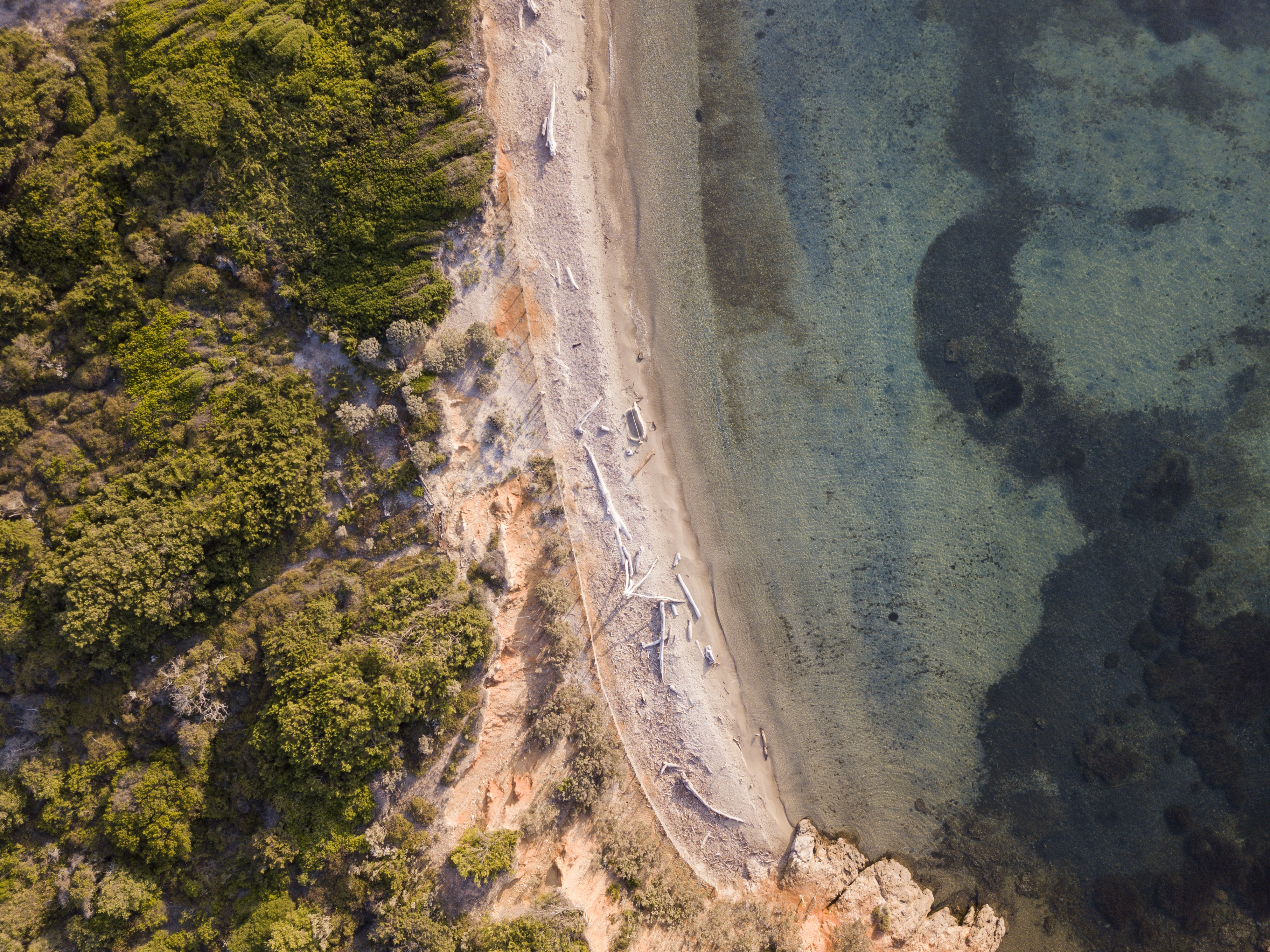 Drone view of the sand coast with old trees by the forest at Hyères, Provence-Alpes-Côte d'Azur, France