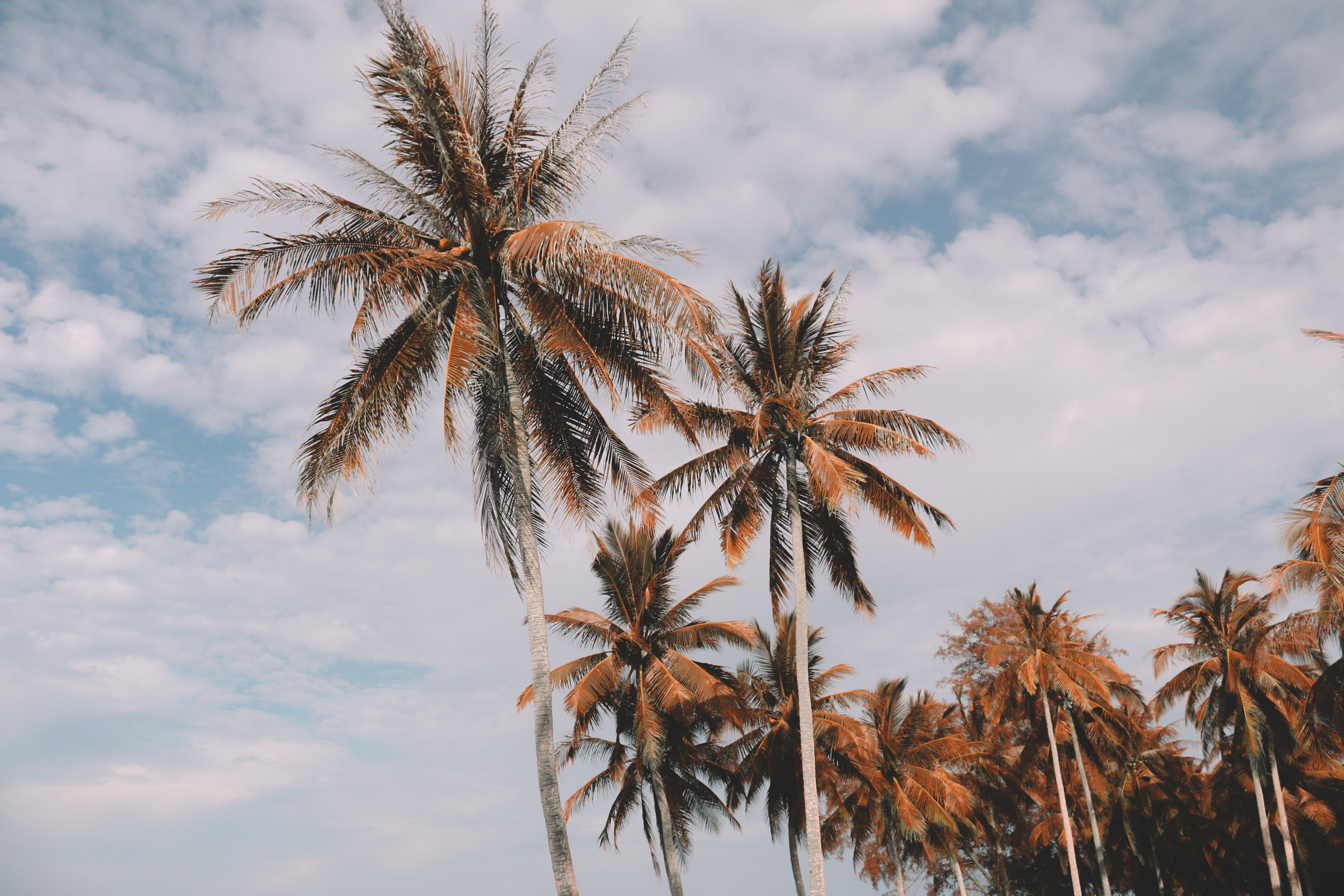 coconut palm tree at daytime