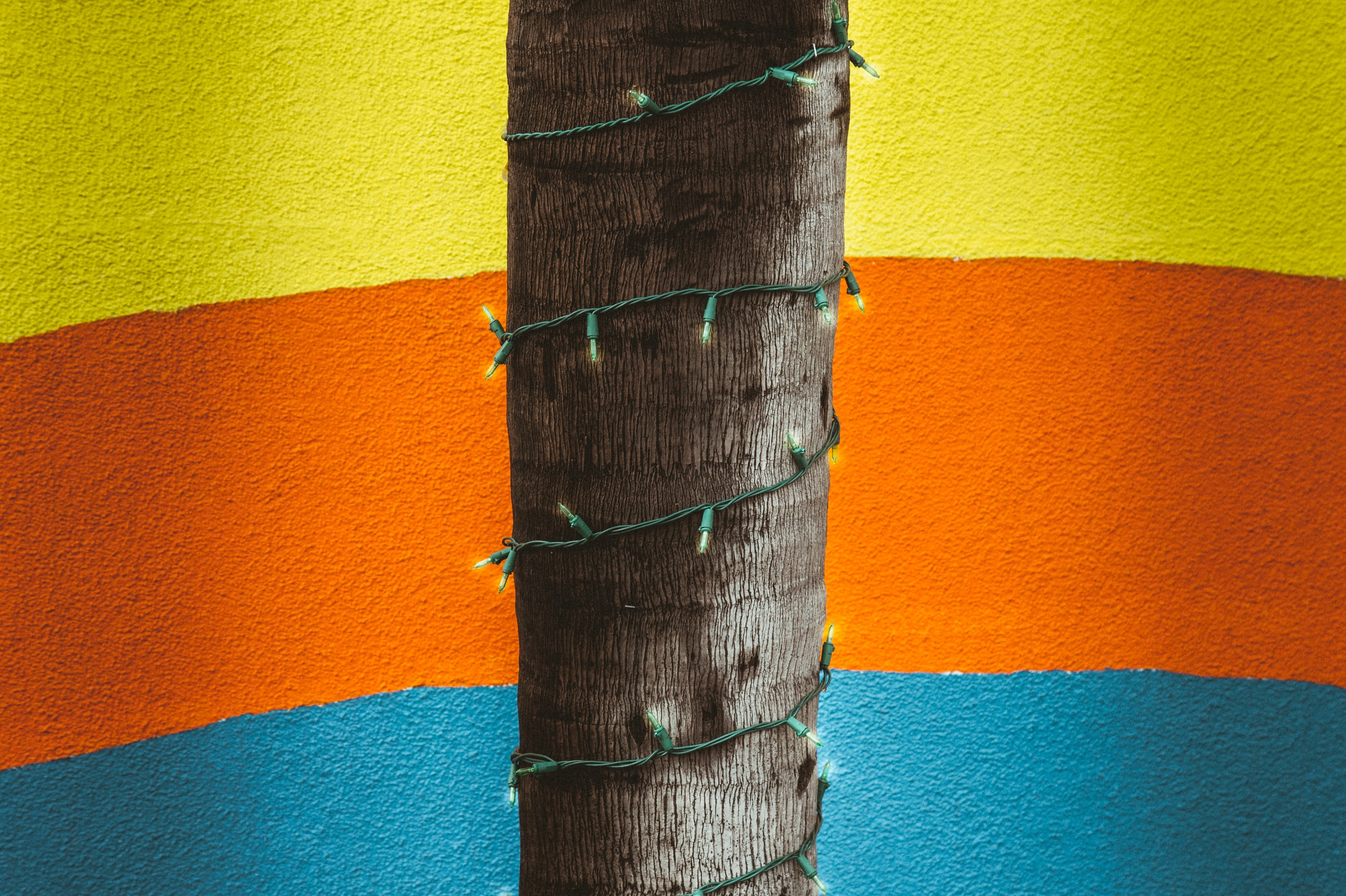 Christmas lights wrapped around a tree trunk against a blue, yellow, and orange wall
