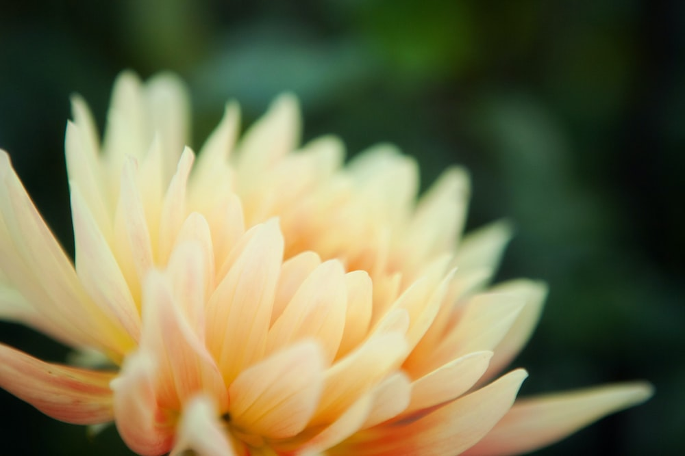 selective focus photography of white and yellow petaled flower