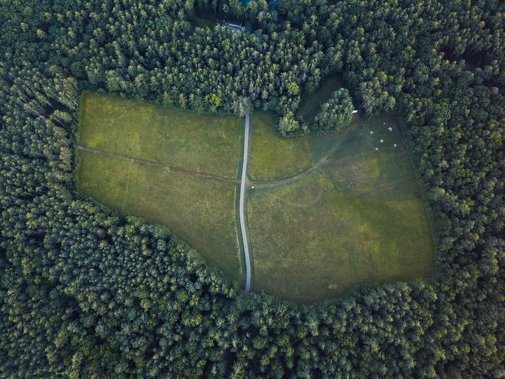 areal view of green leafed tree lot