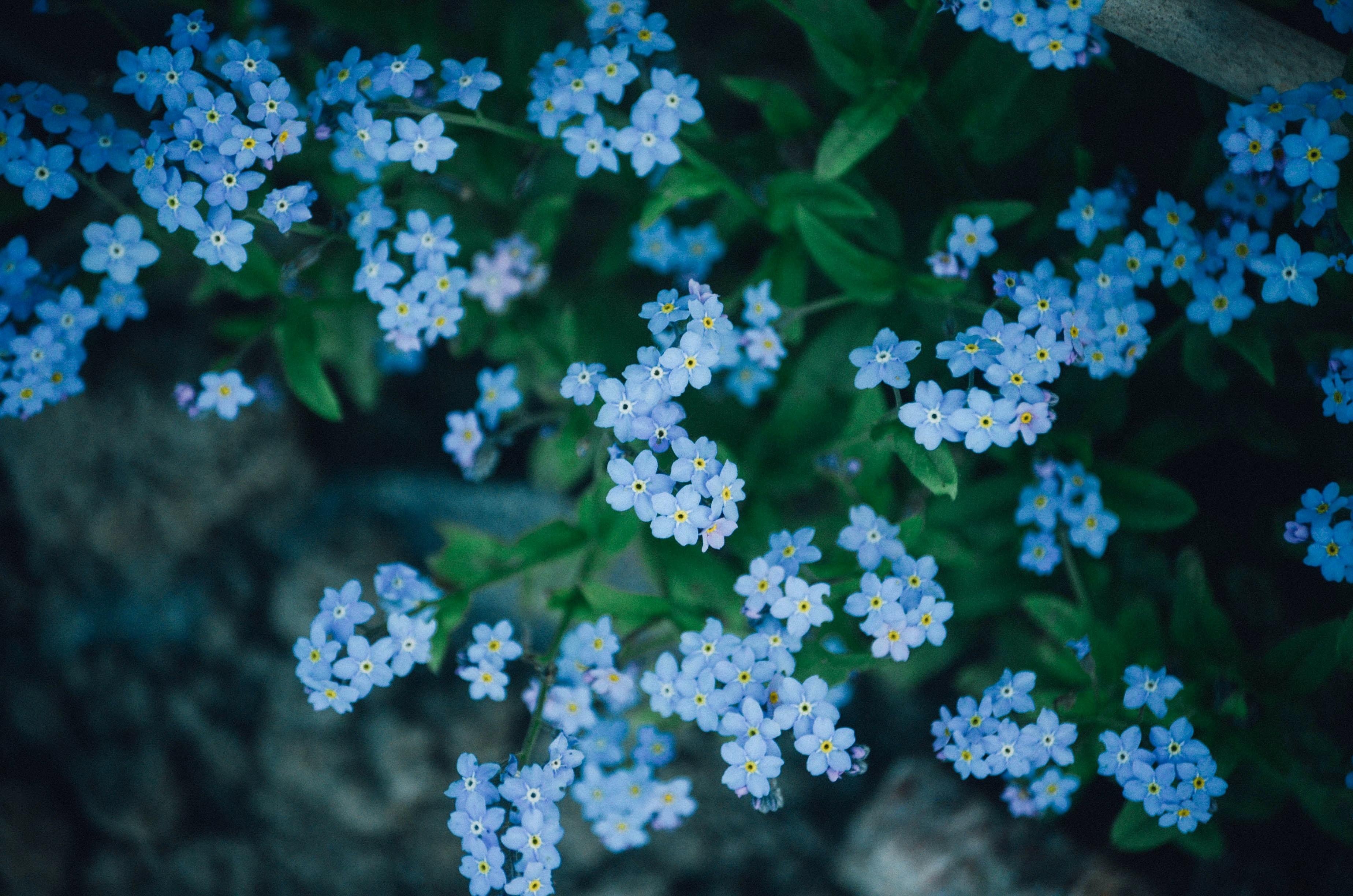high-angle photo of blue petaled flowers