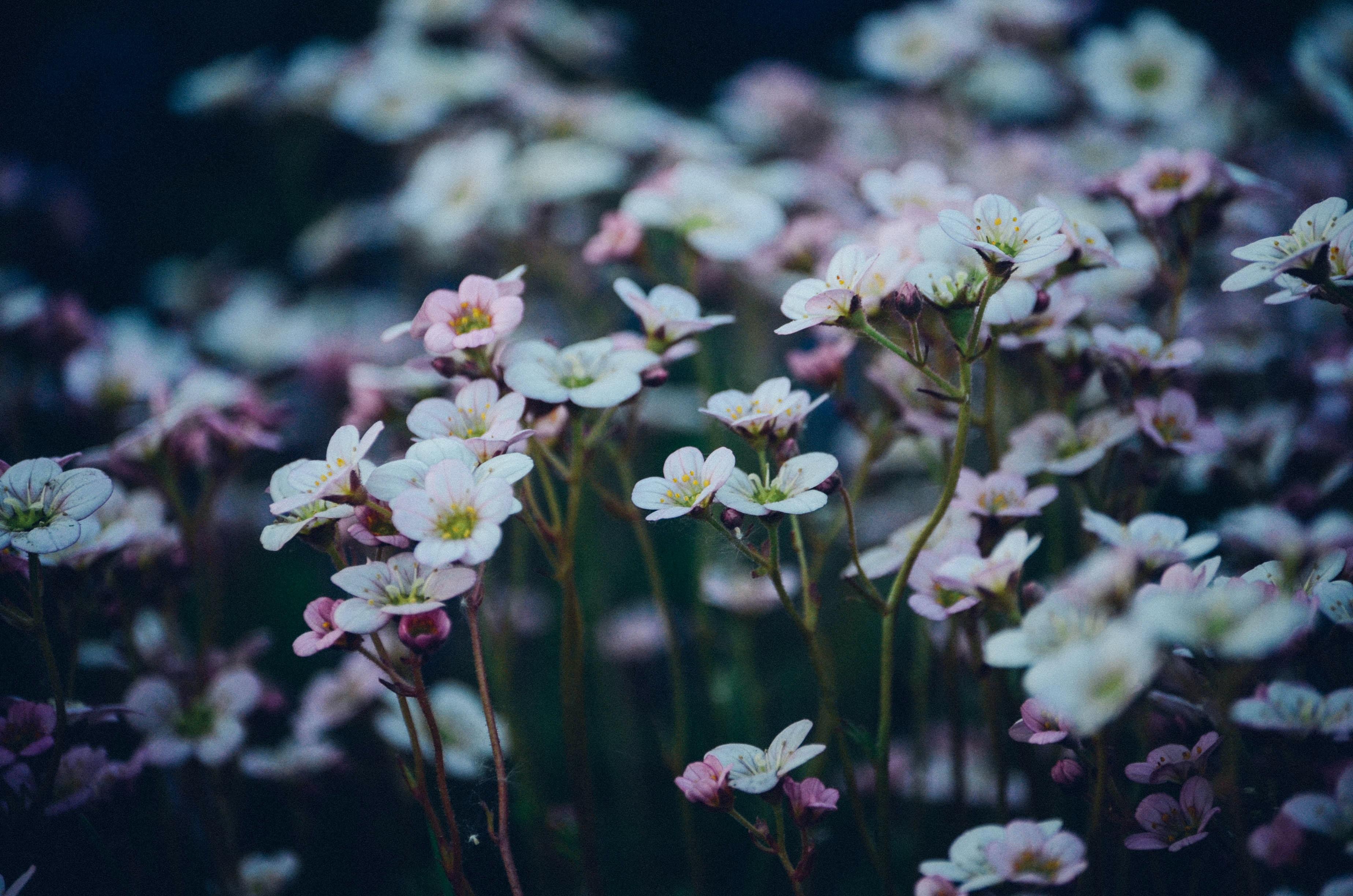 closeup photo of field white petaled flower