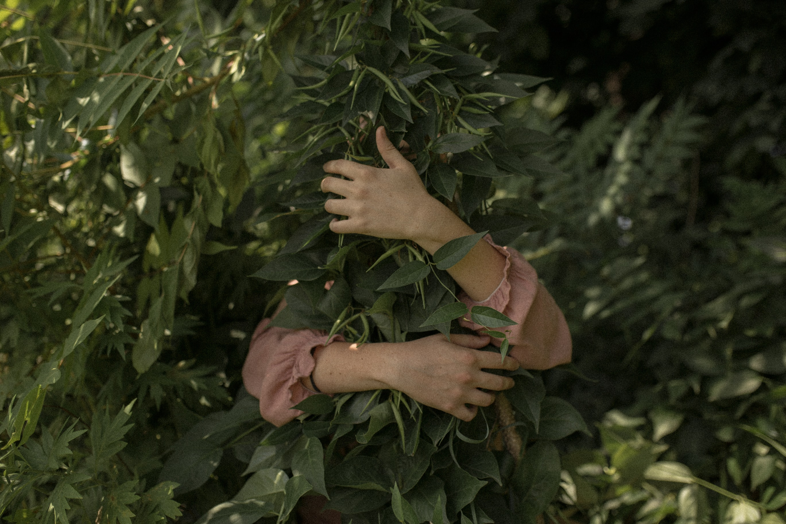 person wearing pink long-sleeved shirt hugging green leaves covering his/her body