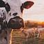 I prodotti senza lattosio della linea Enjoy free di ALDI