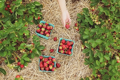 strawberries in blue baskets berry zoom background