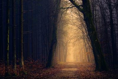 Golden forest pathway