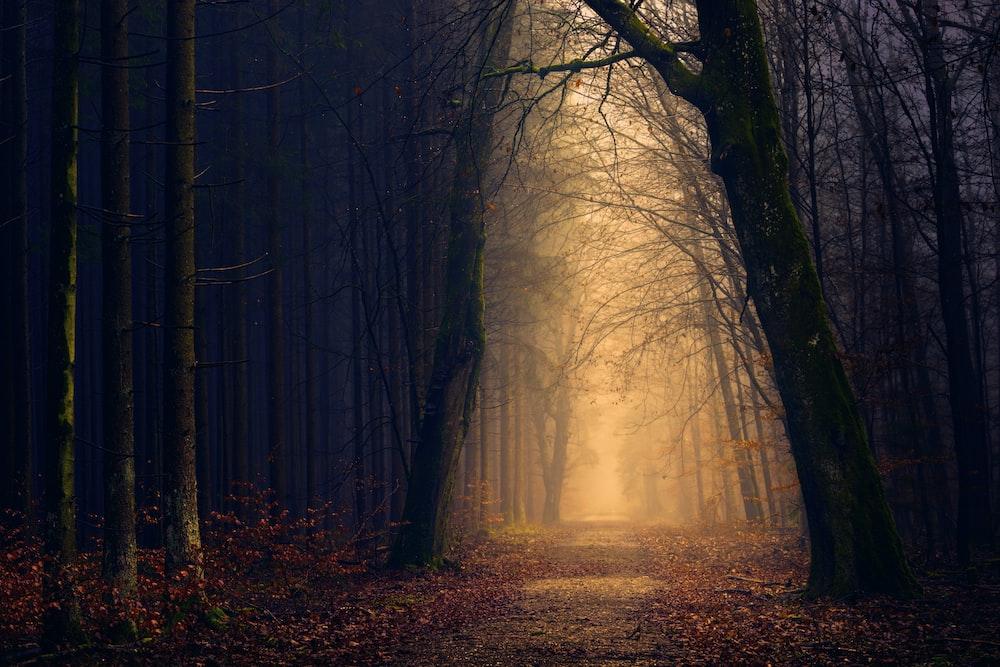 yellow lights between trees