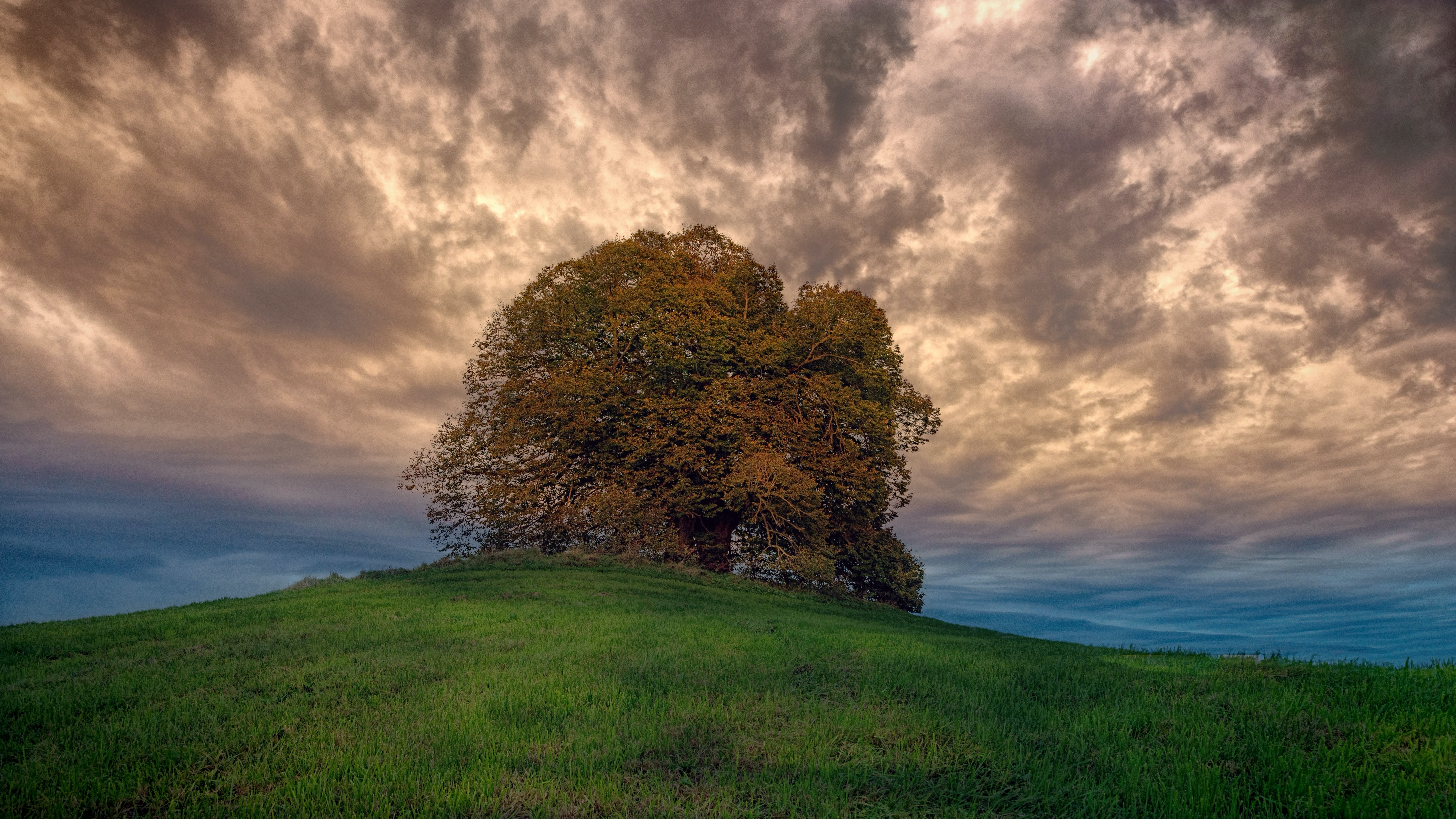 low angle photography of brown leafed tree